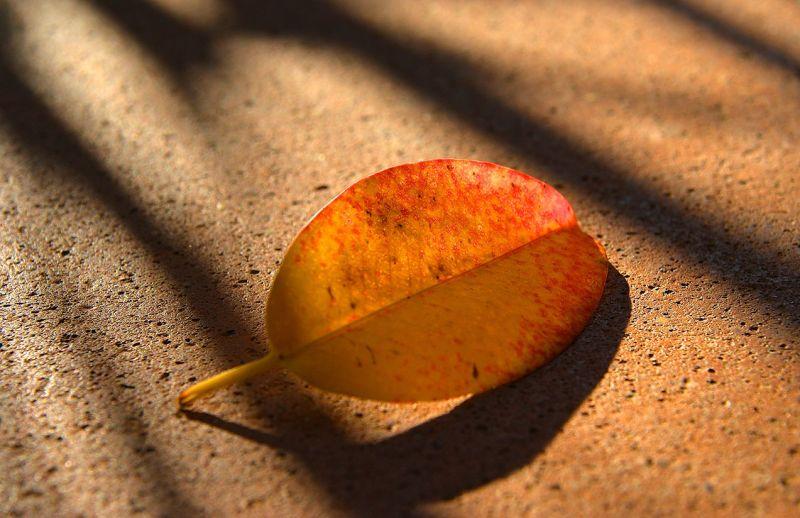 era d'autunno
