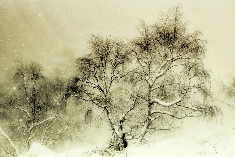 nevicata sulla betulla