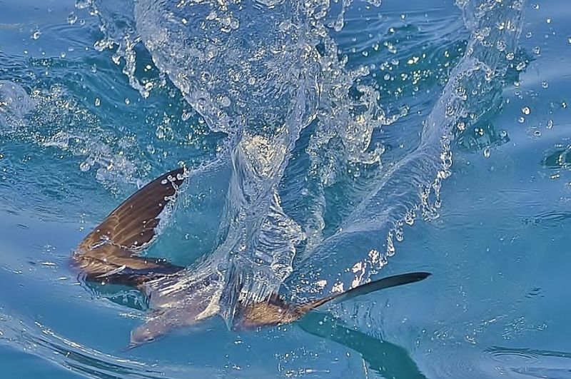 la berta nuotatrice