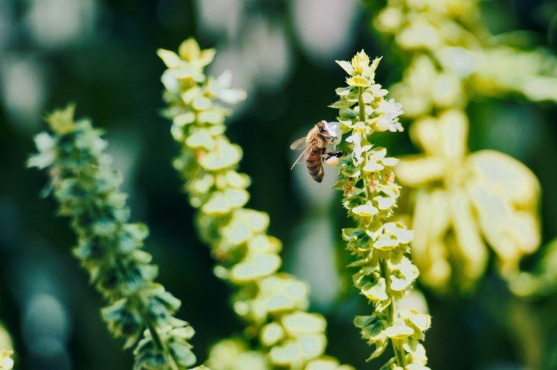 Aria di miele