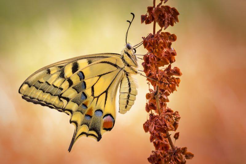 i  colori di Macone in attesa del sole per riscaldare le ali