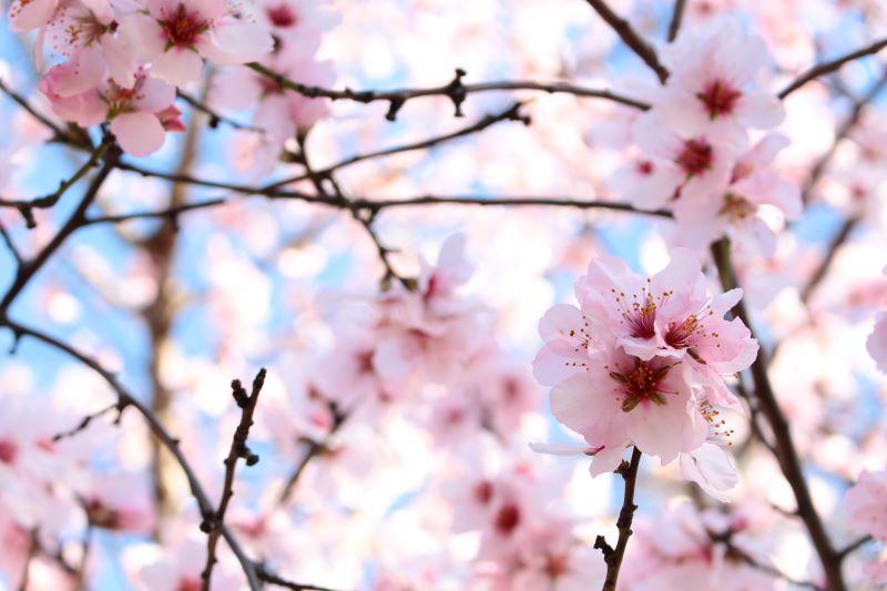 L'opulenza della Primavera