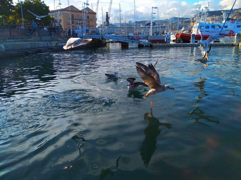 Giochi d'acqua nel porto di Genova
