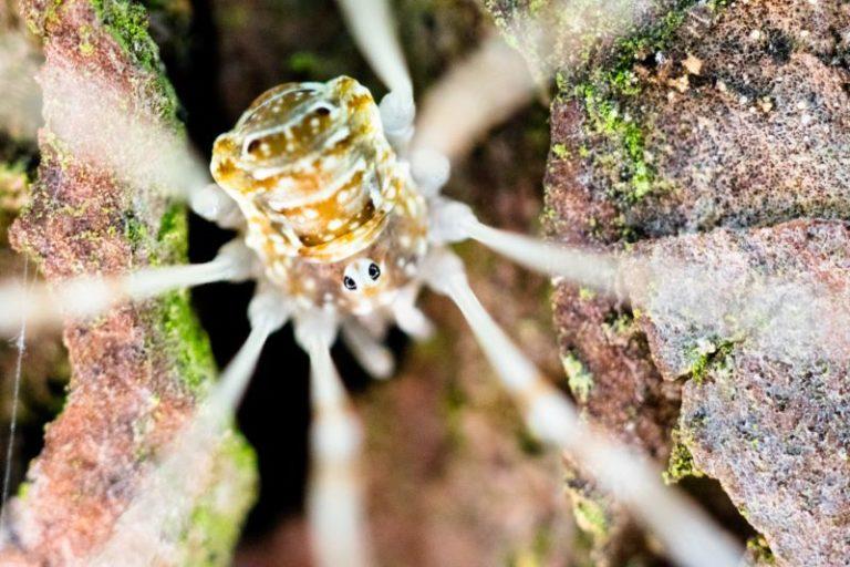 ragno molto piccolo in una corteccia di albero