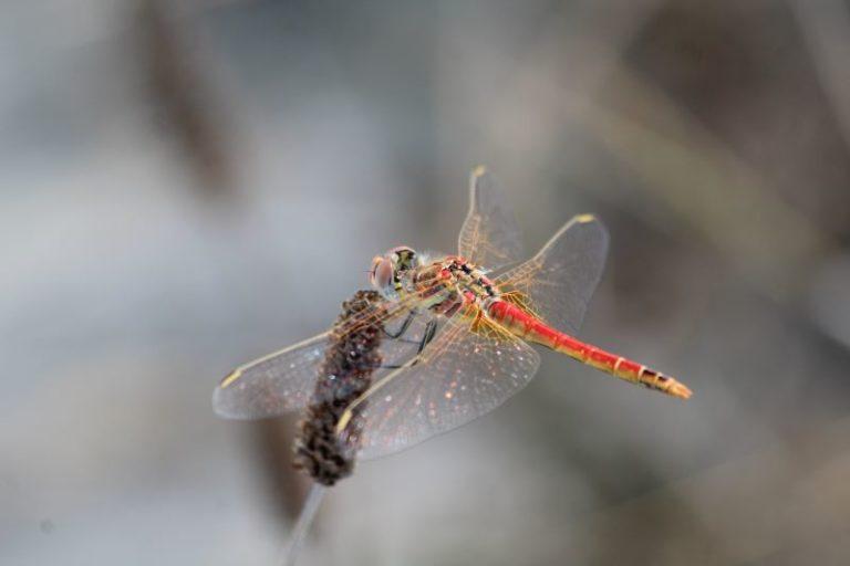 Una libellula brillantinosa