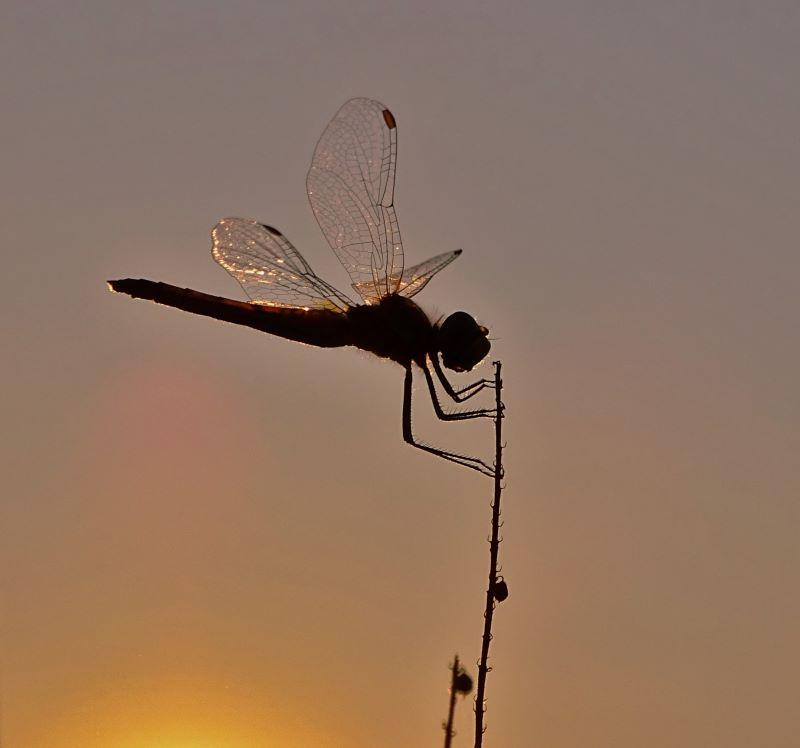 Oro nelle ali