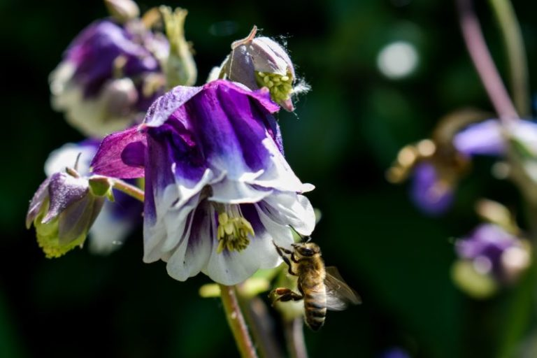 Fiore con ape