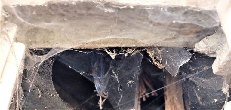 Il colossale lavoro di un piccolo ragno