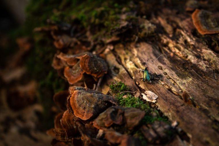 Dettaglio tronco con insetto e funghi