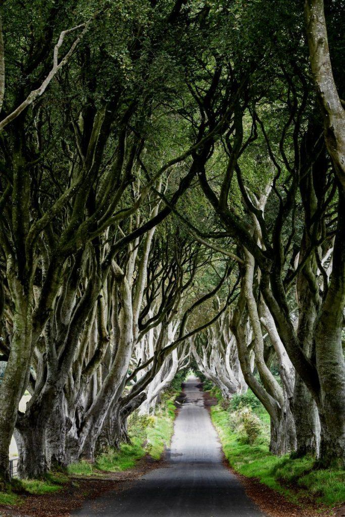 Irlanda del Nord...la foresta incantata