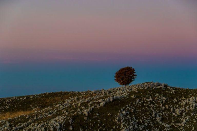 """""""Il solitario"""" - alba sul Monte Pizzoc"""