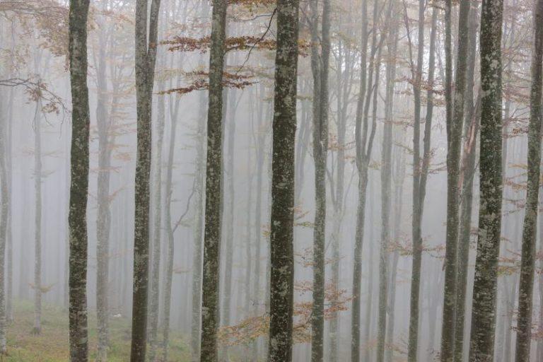 Autunno nel bosco del Cansiglio