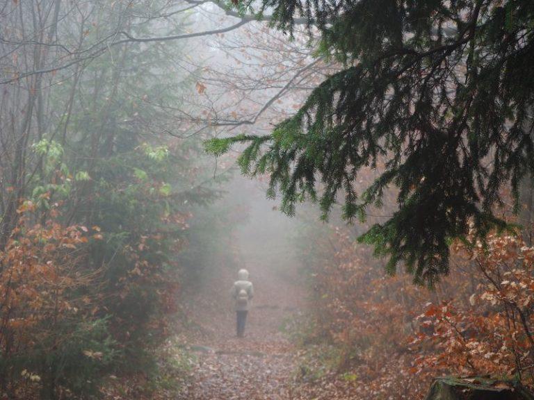 Camminando nella nebbia