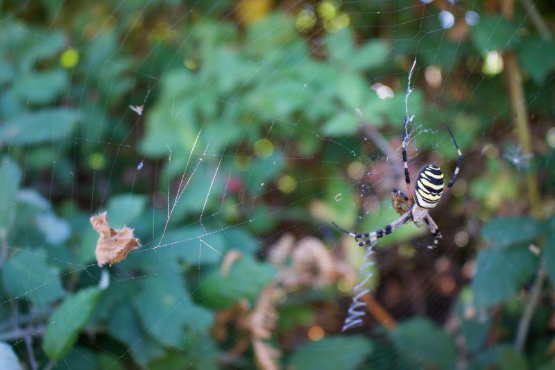 la tela del ragno …ape