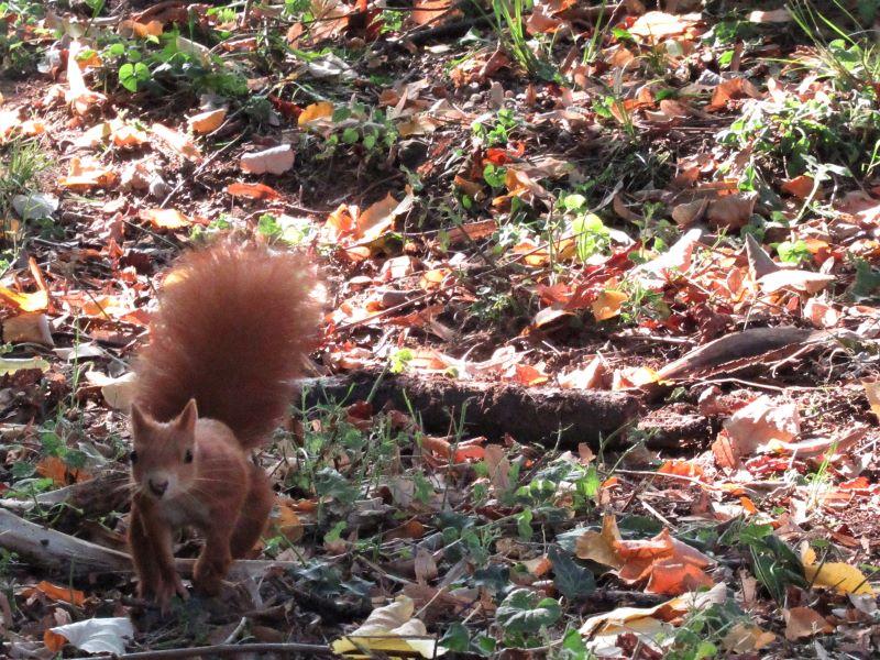 caldi e vivi colori d'autunno e un rapido movimento