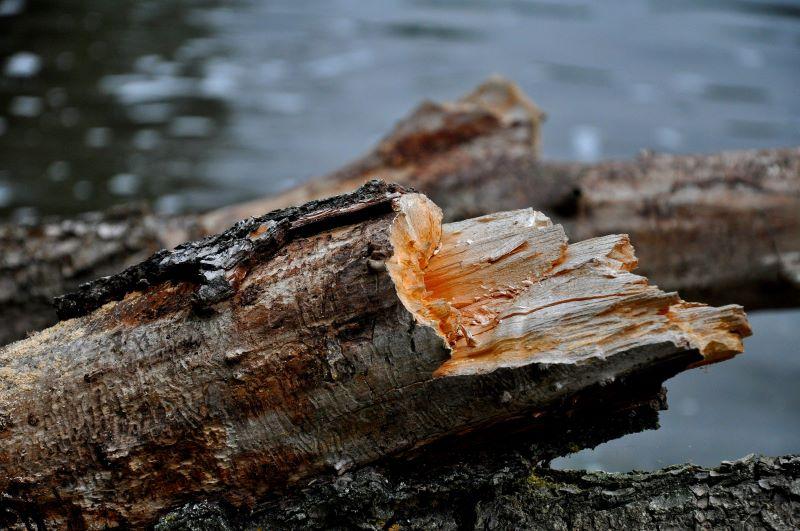 particolarità e ricchezza di un semplice tronco d'albero