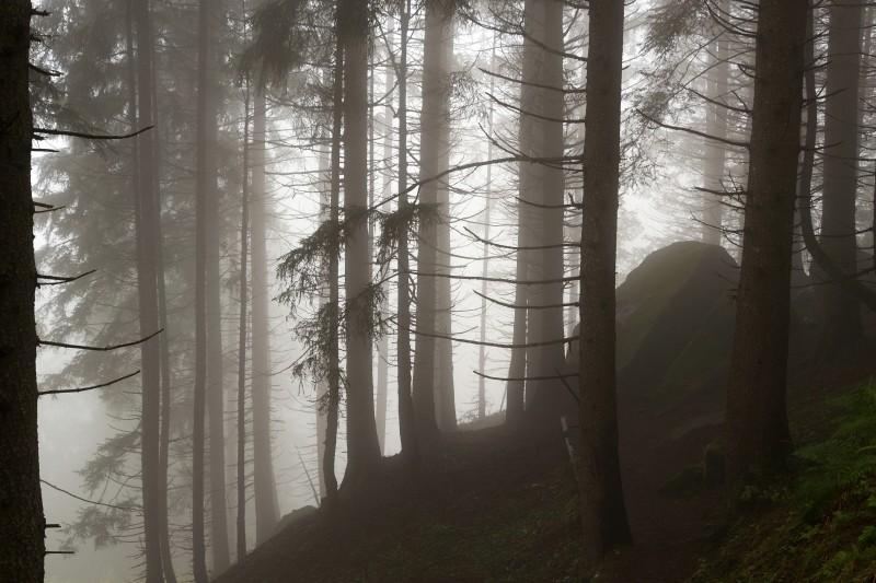 bosco magico
