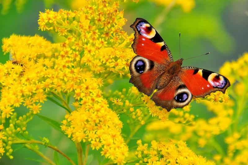 fiore con le ali