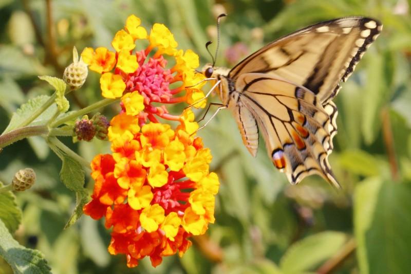 se niente cambiasse non esisterebbero le farfalle