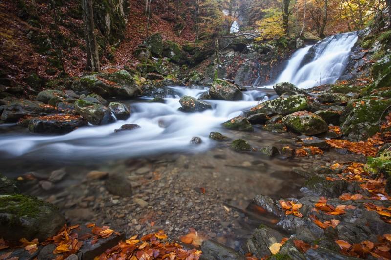 autunno nel bosco