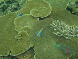 maldive 3