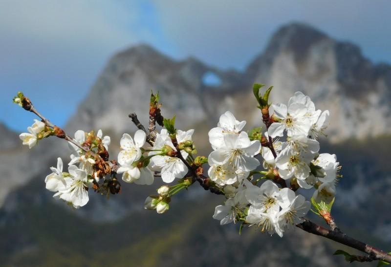 fiori e monte forato