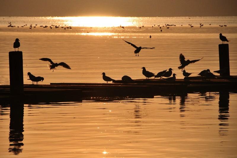 la natura al tramonto