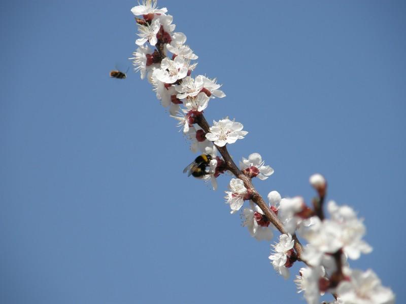 ape in primavera
