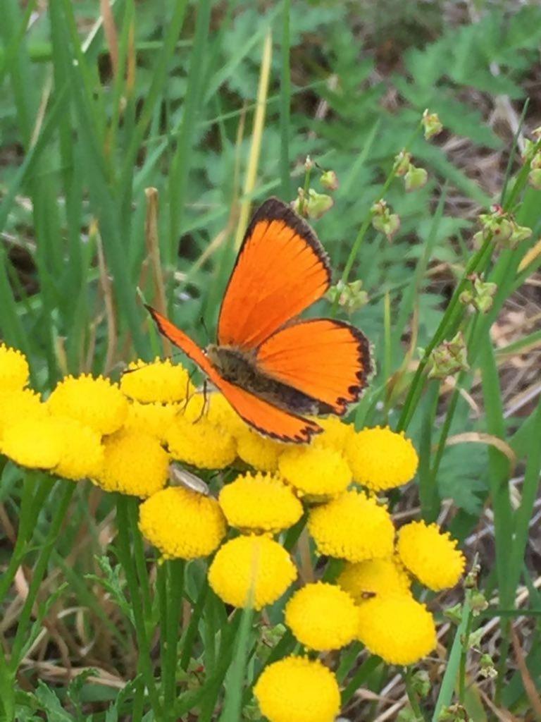 farfalla su fiore giallo