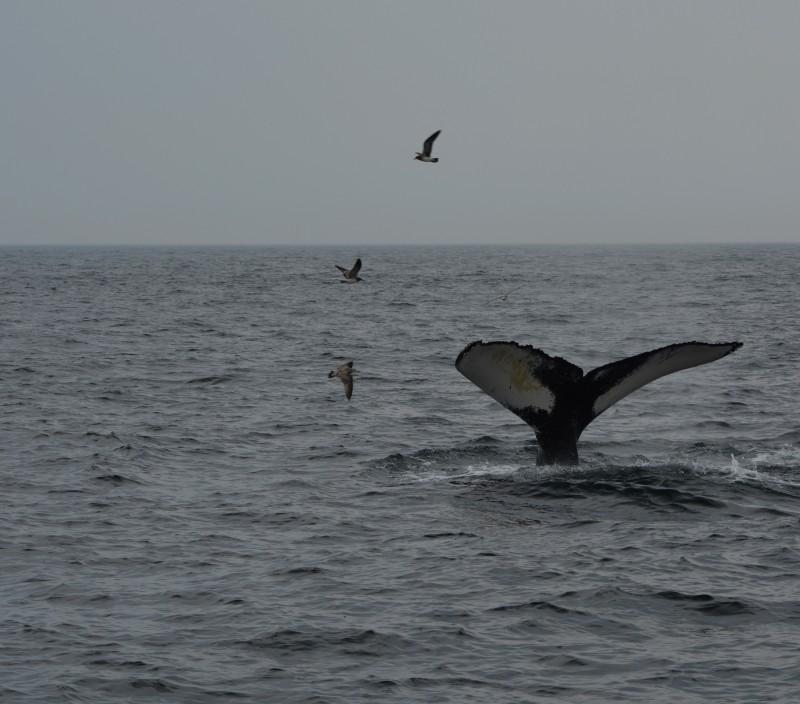 the beauty of sea animals
