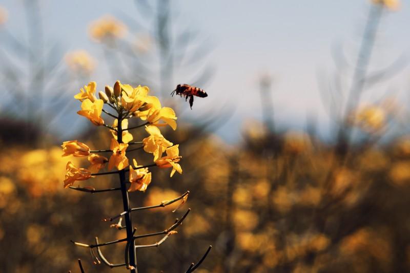 volo d'ape