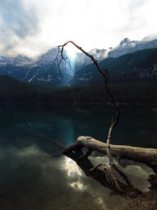 tronco nel lago