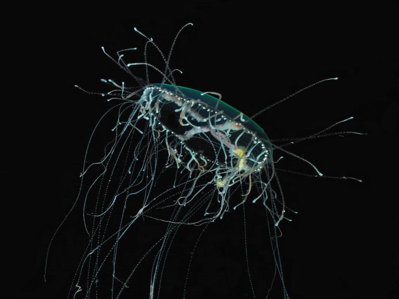 ai sinapsi