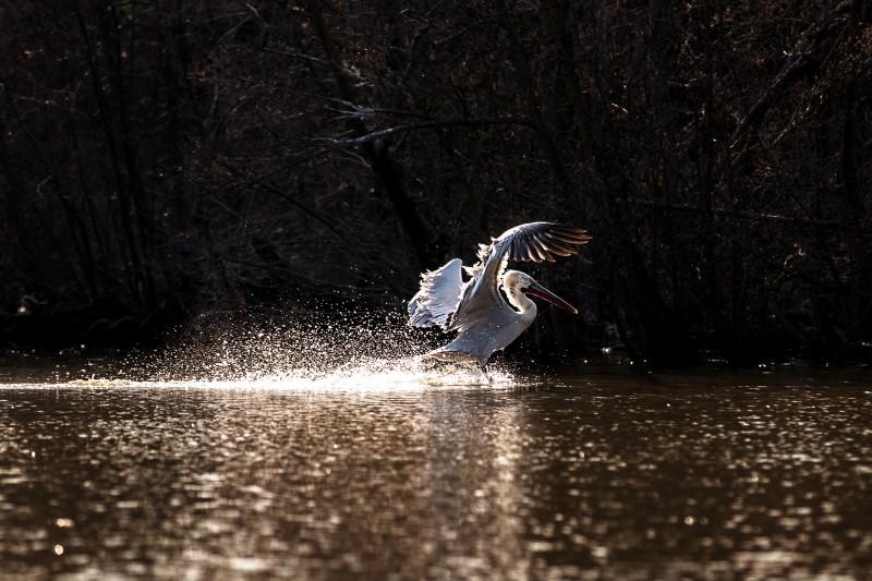 atterraggio sull'acqua