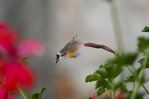 l'incontro tra flora e fauna