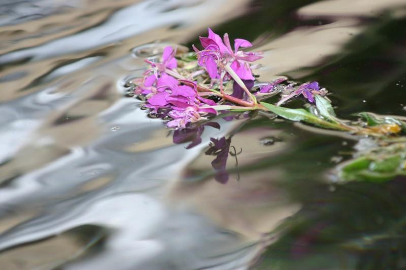 natura umida