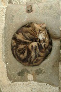 il sonno perfetto