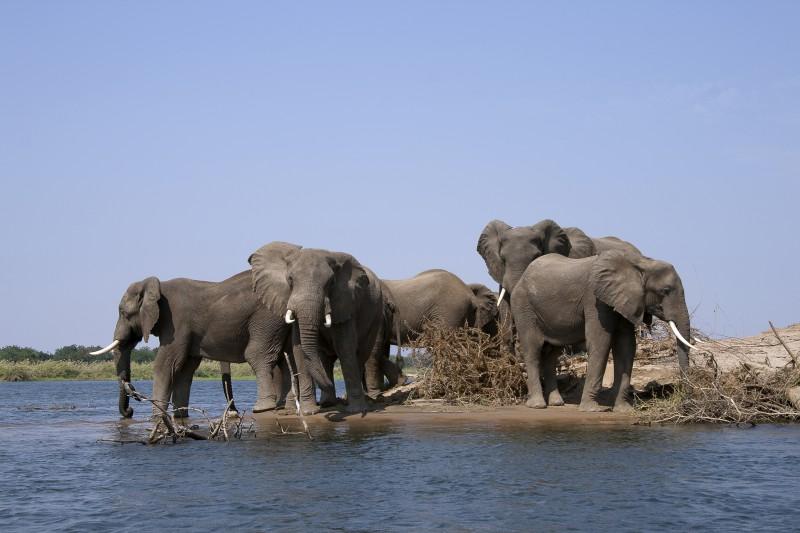 famiglia al fiume
