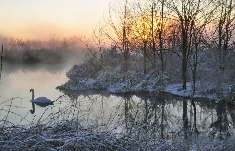 gelida alba