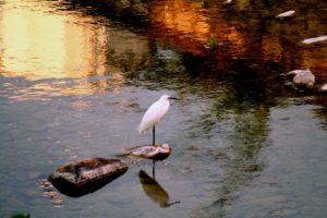 quiete sul fiume