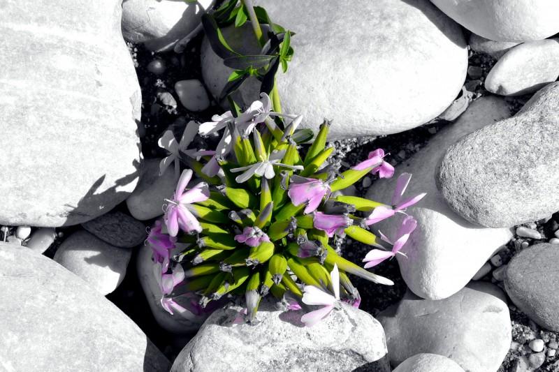 fiore sul fiume versilia
