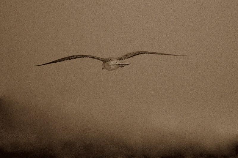gabbiano in volo sul lago al tramonto