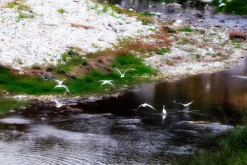 fauna sul fiume versilia