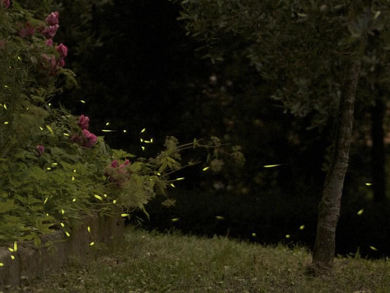 lucciole a mezzanotte n.2