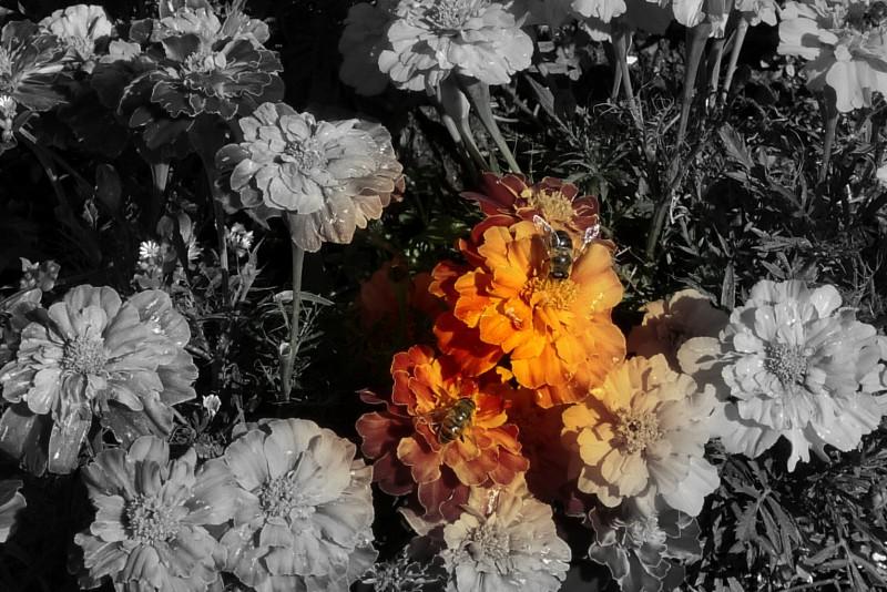 regine a colori