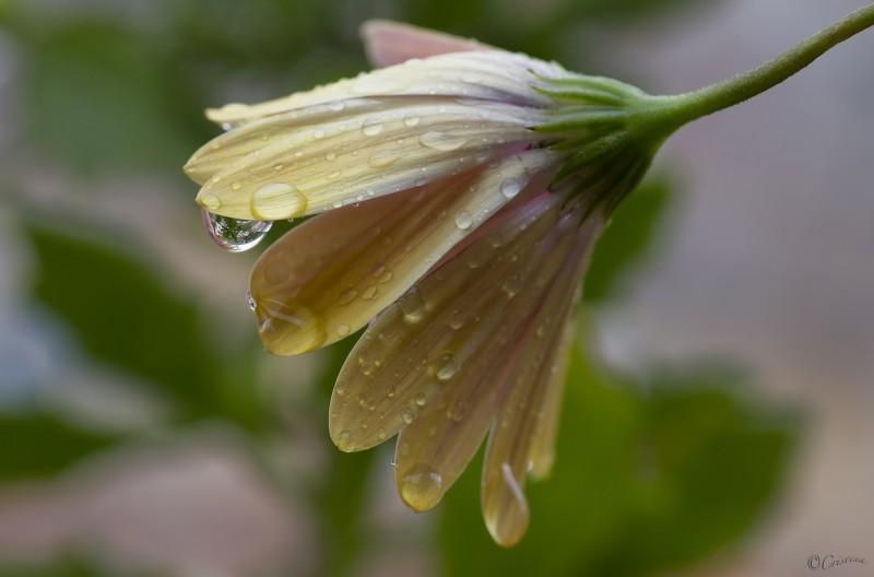 una goccia fiorita