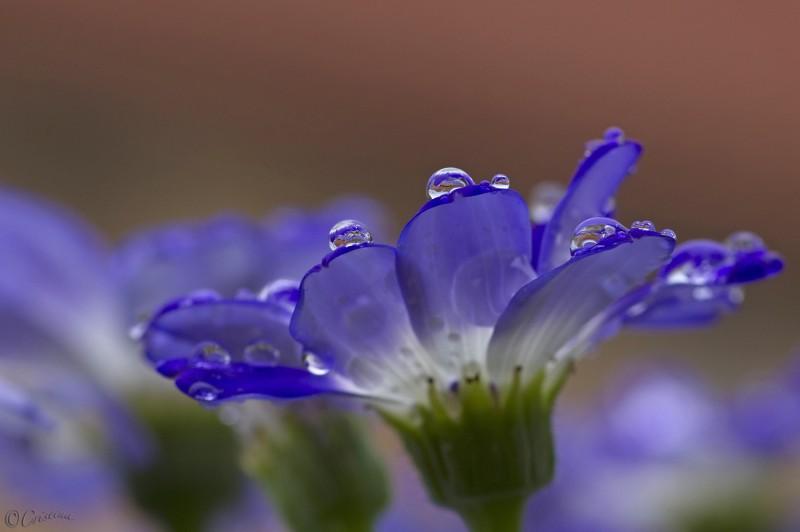 magie della pioggia