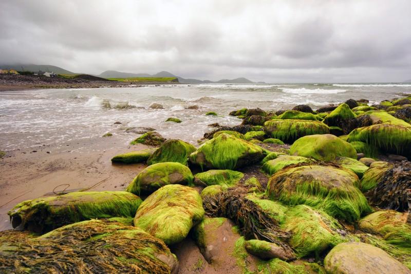 i colori della bassa marea