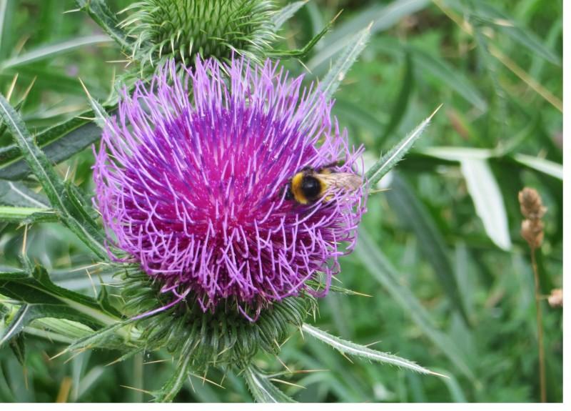 l'ape sul fiore