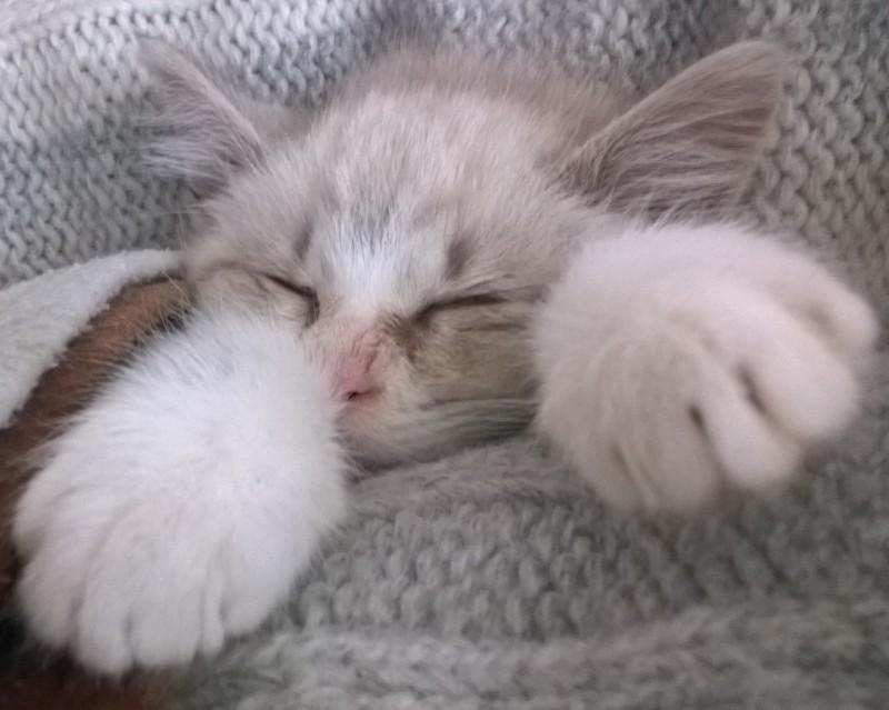 sogni felini